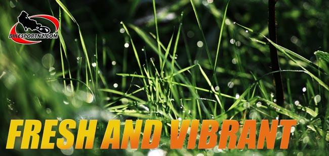 Graphic-rainy-grass-6382-d